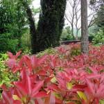 El Jardín Botánico de La Rioja