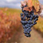 Lugares bonitos para alojarse en La Rioja