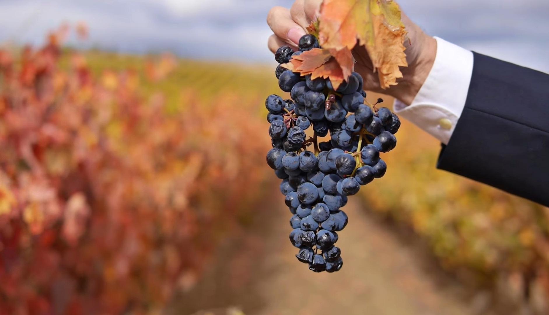 racimo-uva-esencia-rioja