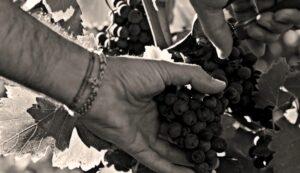 tradición-vitivinícola-enoturismo-rioja